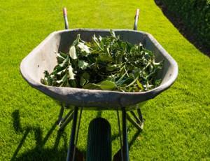 groenvoorziening Emmen