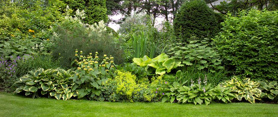 Tuin onderhoudscontract voor particulieren van hovenier emmen for Tuin beplanten